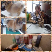 стрижка собак в Днепропетровске
