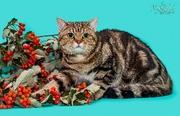 Золотой мраморный котик