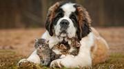 Открылась гостиница для животных в Запорожье