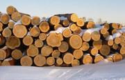 Продам дрова оптом в Днепре и Днепропетровской области.