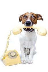 Veterinariya.info Оптовая ветеринарная аптека с доставкой по Украине