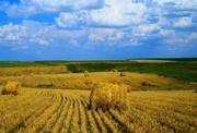 Покупаем дорого пшеницу, кукурузу, ячмень, сою, семечку, рапс