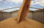 Закупаем зерновые на переработку 0984880370