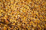 Куплю кукурузу,  сорго,  зерноотходы,  просроченный посевной,  Днепр