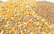 Кукурудза,  соя,  фуражна пшениця. Закупка.