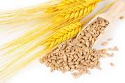 Закуповуємо вологу кукурудзу,  фуражну пшеницю,  сою,  соняшник.