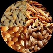 Постоянно закупаем зерноотходы зерновые,  масличные,  бобовые